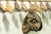 Момент рождения бабочек можно увидеть