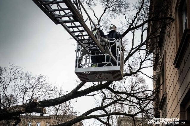 Ураганом в Петербурге повалило больше ста деревьев