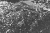 27 января 1945 года в Освенцим вступили советские солдаты, обнаружившие семь с половиной тысяч узников, а также более миллиона частично уцелевших мужских и женских комплектов одежды, а также множество предметов бытовой утвари.