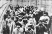 За время существования концлагеря Освенцим было совершено около 700 попыток побега, 300 из которых увенчались успехом.