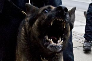 В Челябинске наказали хозяина собаки, искусавшей пожилого человека