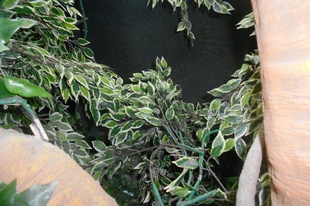 4 этаж стелы оформлен в стиле природного парка. Древо жизни из кинофильма «Аватар», в зарослях которого скрываются духи предков из фильма, огромные пауки, парад планет– все это на интерактивных экранах.
