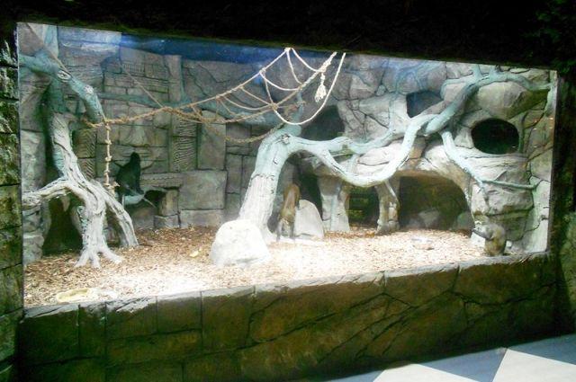 Этажом ниже расположен экзотариум, площадью около 100 кв. м. Здесь в благоустроенных вольерах живут обезьяны, сурикаты, ящерицы и змеи, лягушки и пауки.