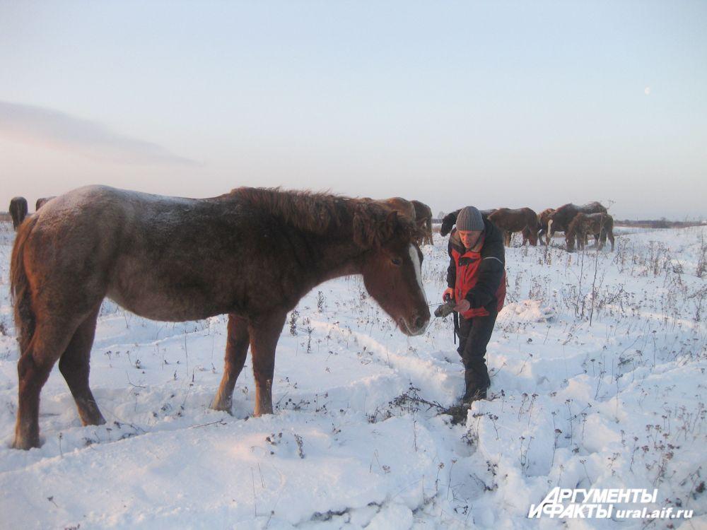 Лошадки абсолютно не боятся человека
