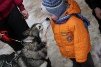 Дети с удовольствием общались с хаски.