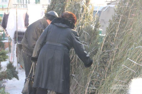 Живые ели высотой метр стоят от 300 рублей.