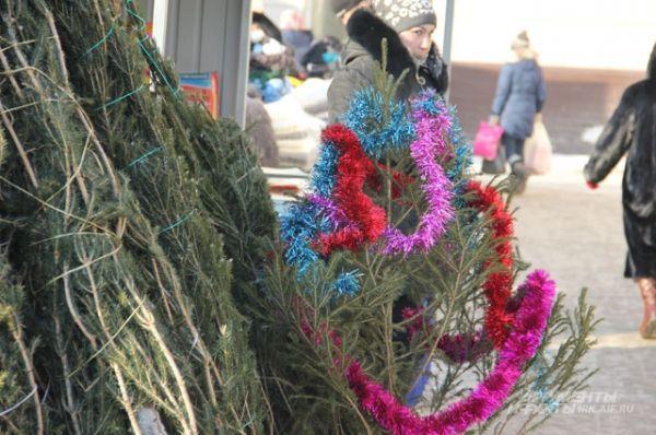 За 150 рублей ёлочка будет высотой 50-60 см.