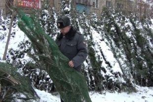 В Челябинске нашли 18 нарушений при продаже новогодних елок