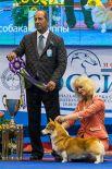 Победителем первой группы конкурса стал пёс породы вельш корги пемброк.