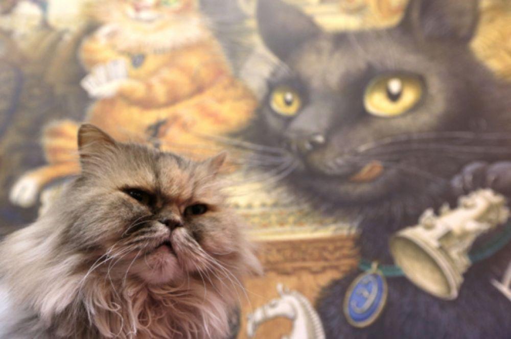 В ноябре в Санкт-Петербурге было открыто выставочное пространство «Республика кошек», в котором объединились клуб, арт-кафе, библиотека и, конечно, площадка для самых красивых кошек города.