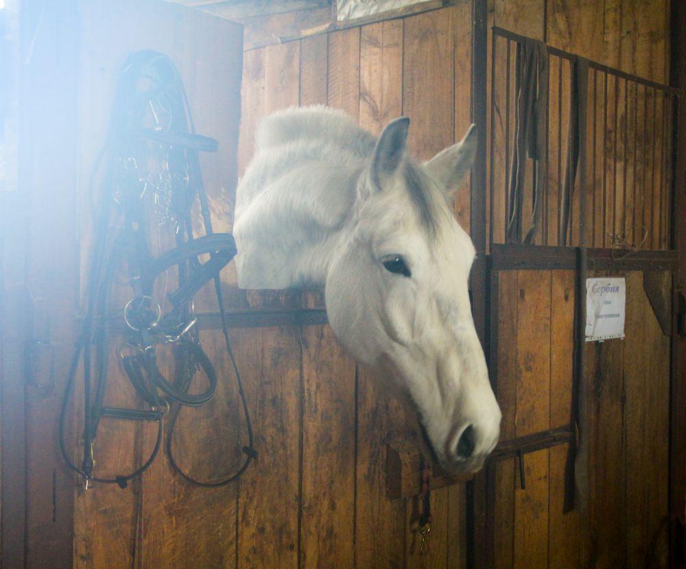 Когда вас нет рядом, лошадь грустит