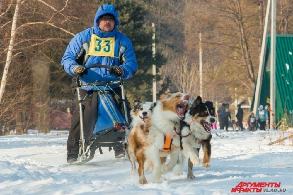 Собак проверяли на агрессивность во время гонок.