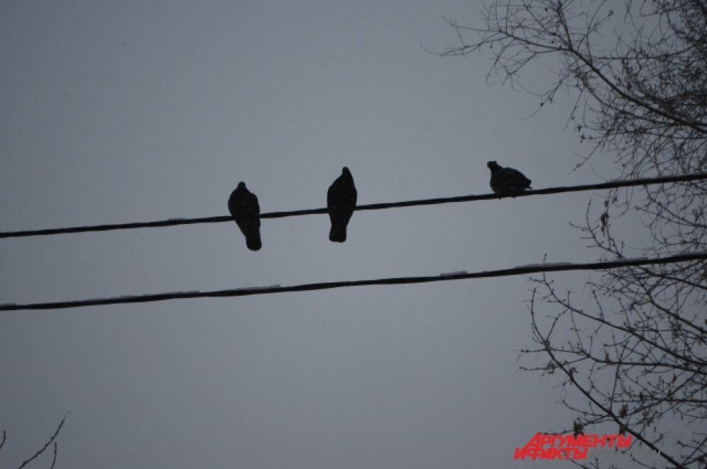 Птицам этой зимой раздолье!