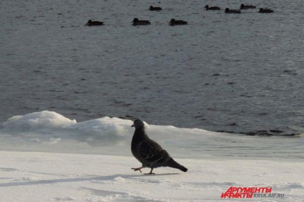 Начиная с аномально тёплого ноября 2013 года приятная погода в Сибири сохраняется вплоть до Крещения.