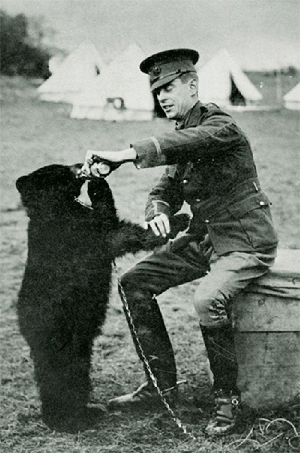 История Винни-Пуха началась с реальной медведицы Виннипег. Будучи медвежонком Виннипег являлась талисманом Канадского армейского ветеринарного корпуса. На фото: Виннипег в 1914 году.