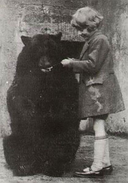 В 1919 году её забрали в Лондонский зоопарк, где пятью годами позже ее увидел сын Алана Милна – Кристофер Робин. Четырёхлетний мальчик подружился с ней и часто навещал. На фото: Виннипег в зоопарке в 1924 году.