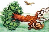 """""""Орел из-под небес к семье своей С богатым завтраком с охоты торопился, Он видит: дуб его свалился И подавило им Орлицу и детей"""""""