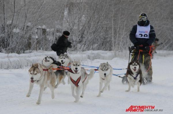 Кубок Сибири по ездовому спорту прошёл в Омске.