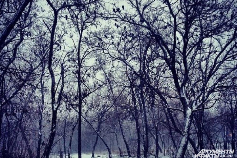 На этом фоне зима в Дагестане кажется очень теплой - в Махачкале всего лишь 3-4 градуса мороза