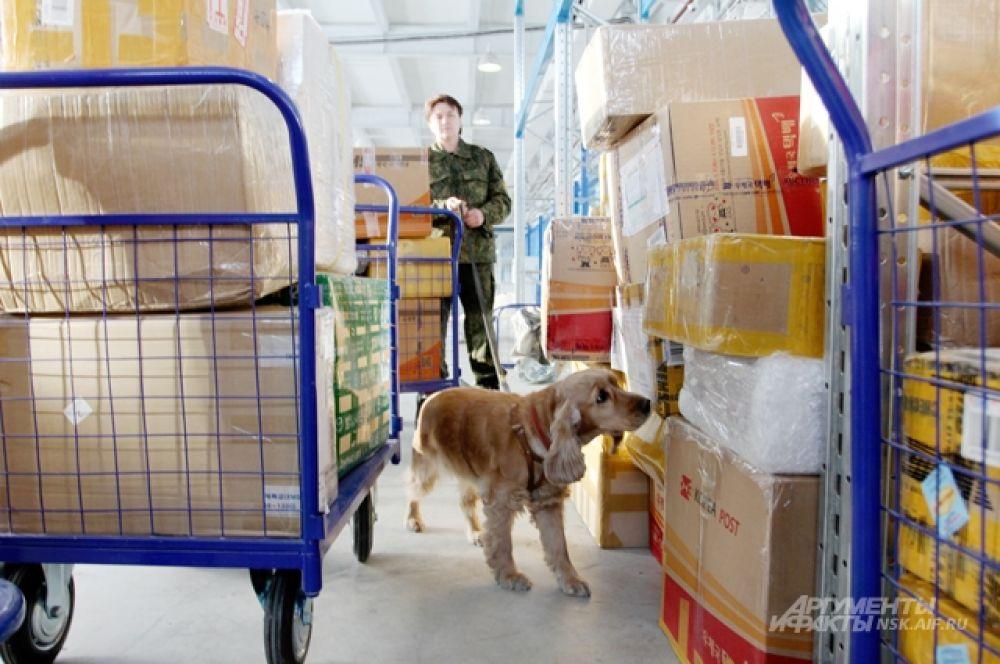 Все посылки проверяет собака. Сегодня в роли инспектора – спаниэль Уля.
