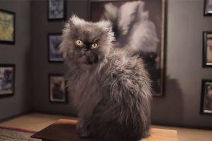 Звездный кот полковник мяу скончался