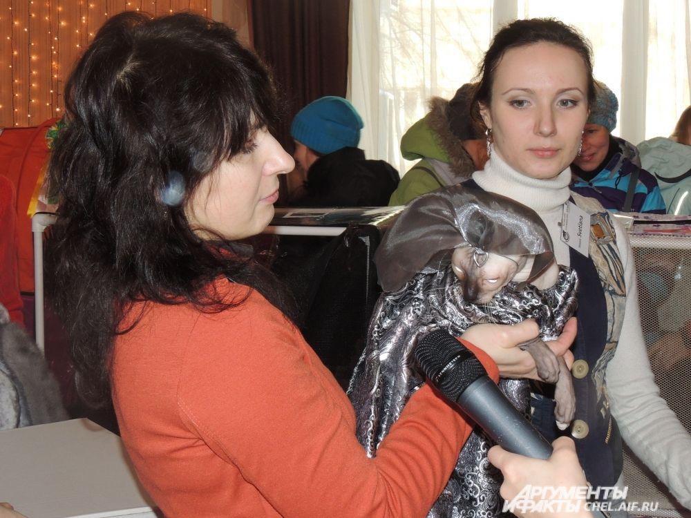 Одетая в наряд королевы, кошка привлекла внимание СМИ.