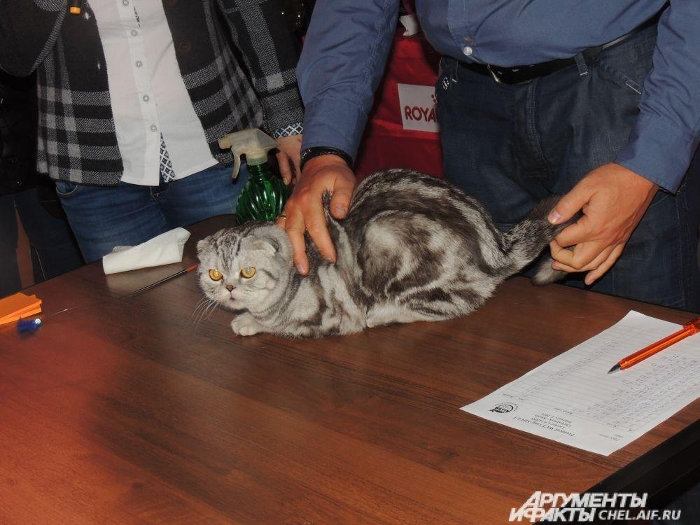 Судья соревнований Андреас Кречмер-Крайзек говорит, в Челябинске много достойных кошек.