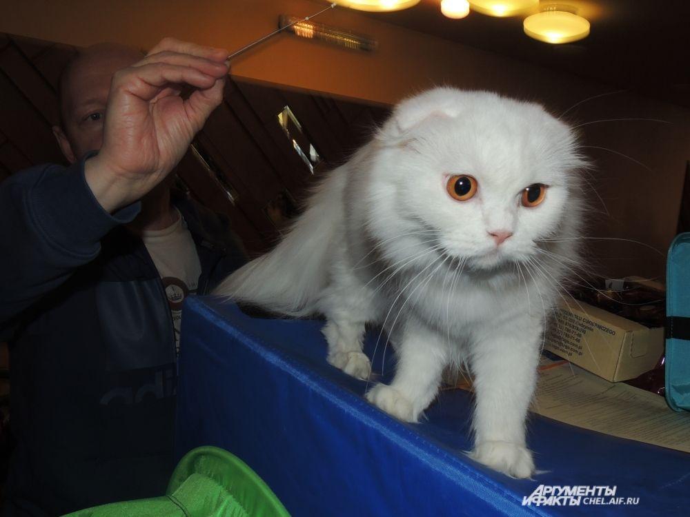 Белый, как все символы Олимпиады, кот снискал восхищение гостей выставки.