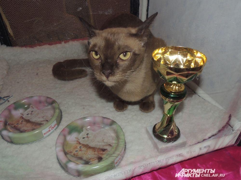 Кот семейства сиамских, собравший немало призов, невозмутимо смотрел на собравшихся.