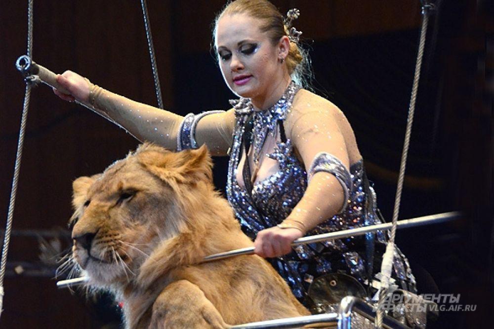 Чаще в цирке работают львицы, чем львы. Самцы слишком ленивы