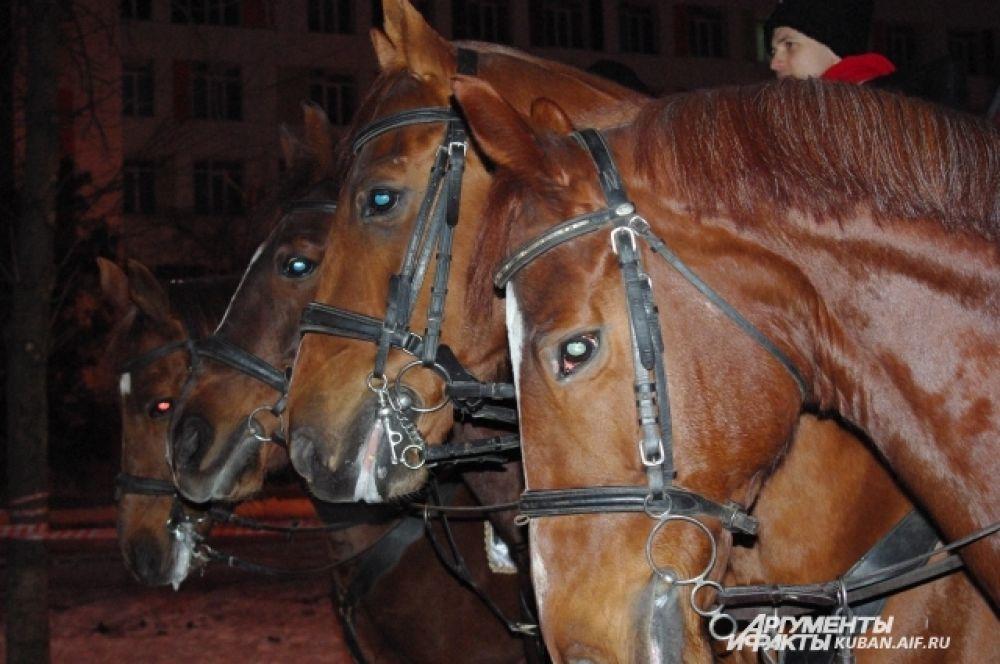 Эскорт ожидает факелоносца. Лошадь Халва (крайняя справа) больше остальных рвалась в путь.