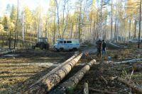 Незаконная вырубка леса.