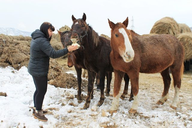 Теперь Ирина знает секрет того, как подружиться с лошадью.