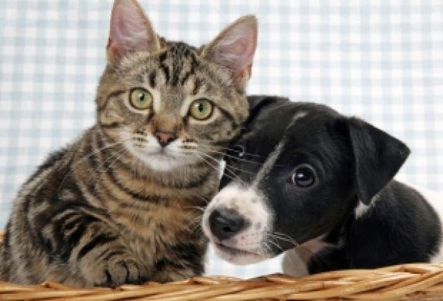 В приютах и на передержках ждут хозяев и собаки, и кошки.