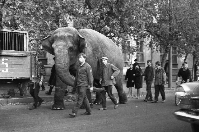 Фрумгарц М.И. Зверинец приехал. 1968.
