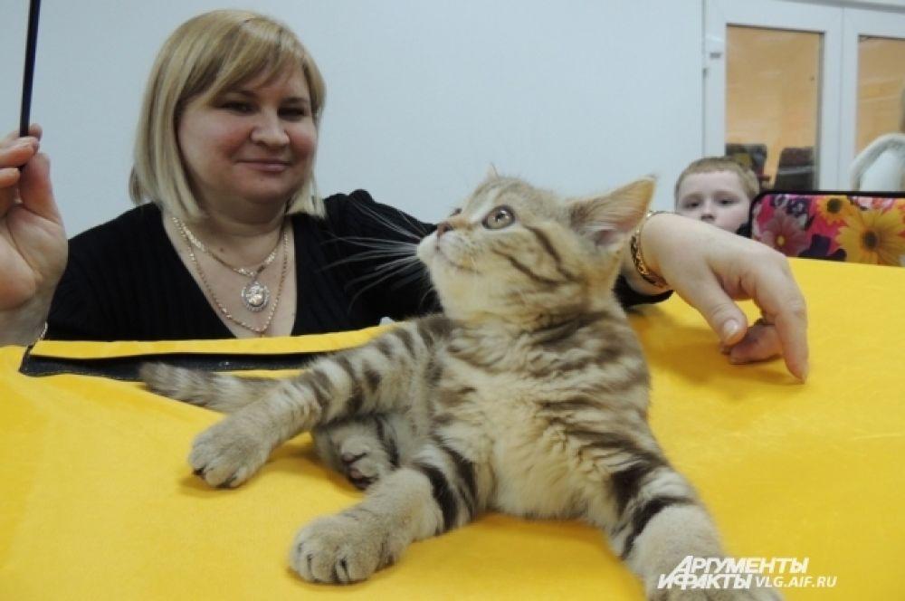На выставке можно было не только посмотреть и купить котят, но и даже выиграть.