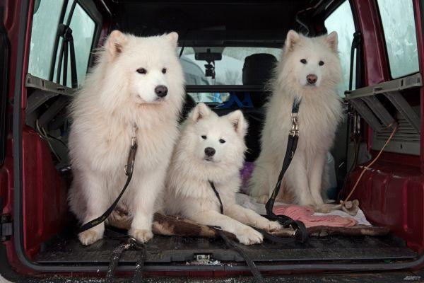 «Созвездие гончих псов»