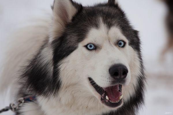У каждого пса свой характер