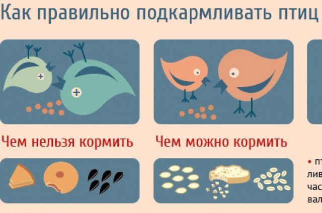 какой корм нельзя давать птицам зимой