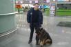 На территории аэропорта постоянно дежурят кинологи с собаками
