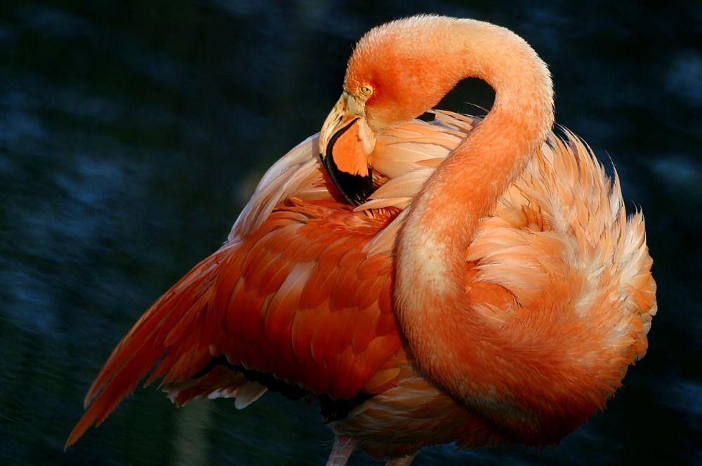 Одной из основных экспозиций зоопарка долгое время остаётся вольер фламинго.