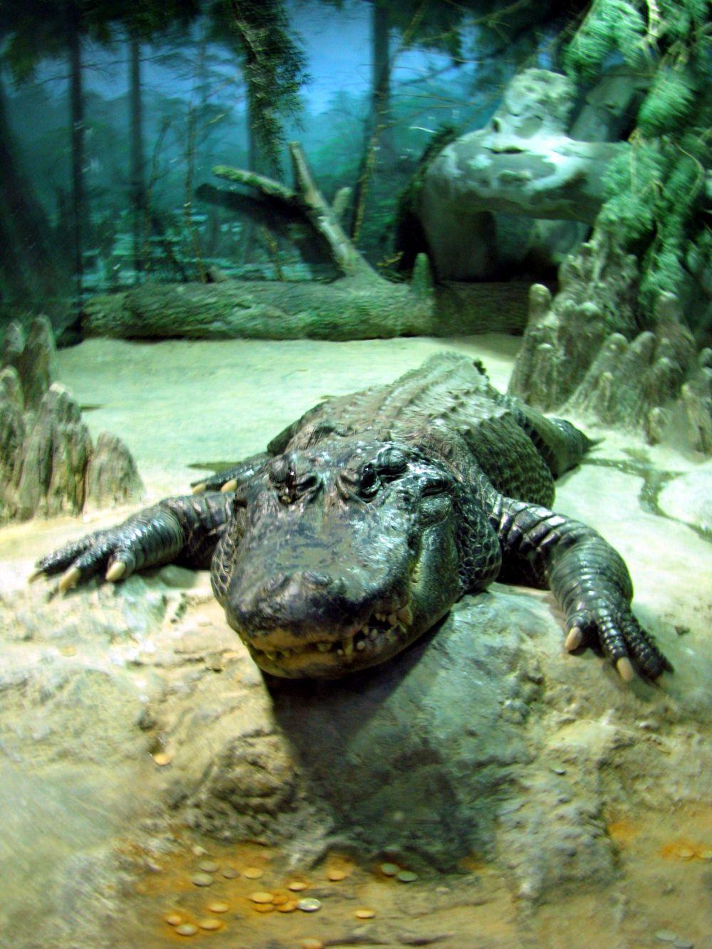 Кроме них на опасных представителей животного мира можно посмотреть в местном террариуме, где обитают аллигаторы.