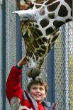 В день этот жираф съедает около 30 килограмм пищи. Сотрудники зоопарка утверждают, что он очень любит свежие ивовые ветки и бананы. Самсон умеет различать посетителей по полу и любит внимание публики.