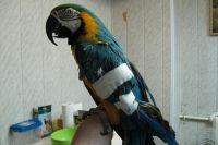 """""""Зеленый попугай"""" помогает птицам  снова начать летать."""