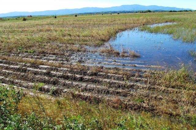 Подтопленое поле в хозяйстве «Заря»