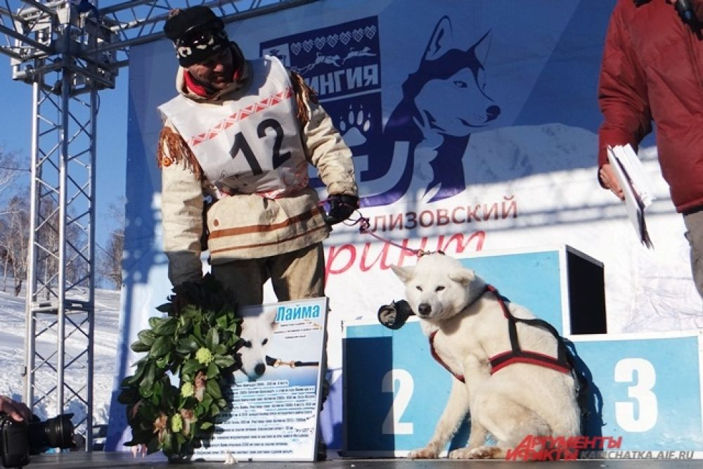 Заслуги собаки на гонках отметили венком из цветов и грамотой.