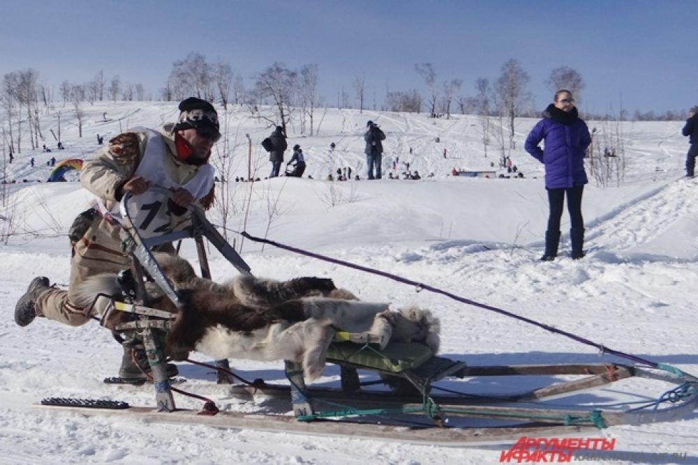 Упряжка Александра Скрягина.