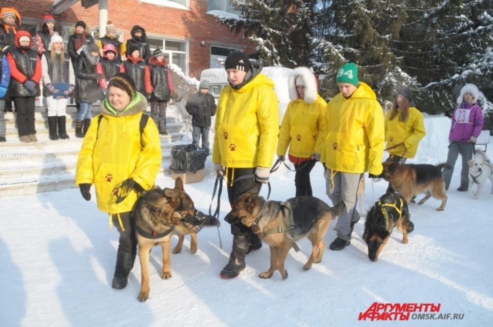 Соревнования по кинологическому спорту прошли в Омске.