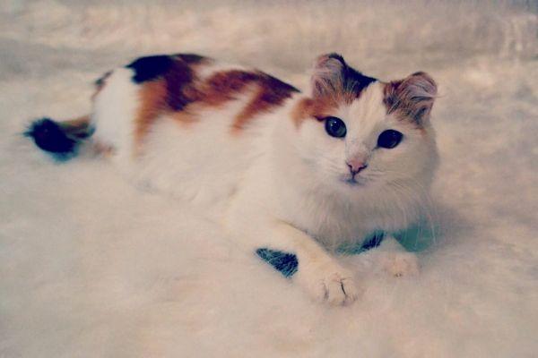 Муся – кошечка самодостаточная и  не  любит сидеть на руках, но всегда находится рядом. Идеальная кандидатура не только в квартиру, но и в частный дом. Куратор Аля: 8-927-519-78-35.