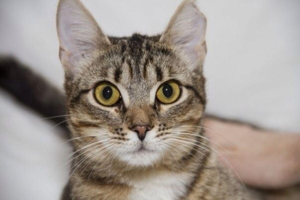Кошке со счастливым именем Удача всего 9 месяцев, но она за свою короткую жизнь уже много раз страдала от жесткого обращения, поэтому заслуживает только самого доброго и заботливого хозяина. Куратор Елена: 8-917-642-81-20.